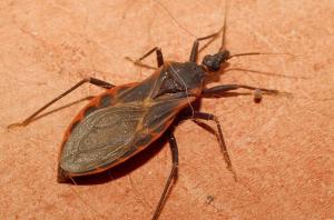 Hewan Bernama Bug